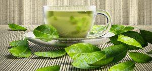 مستخلص الشاي الأخضر للإنقاص الوزن